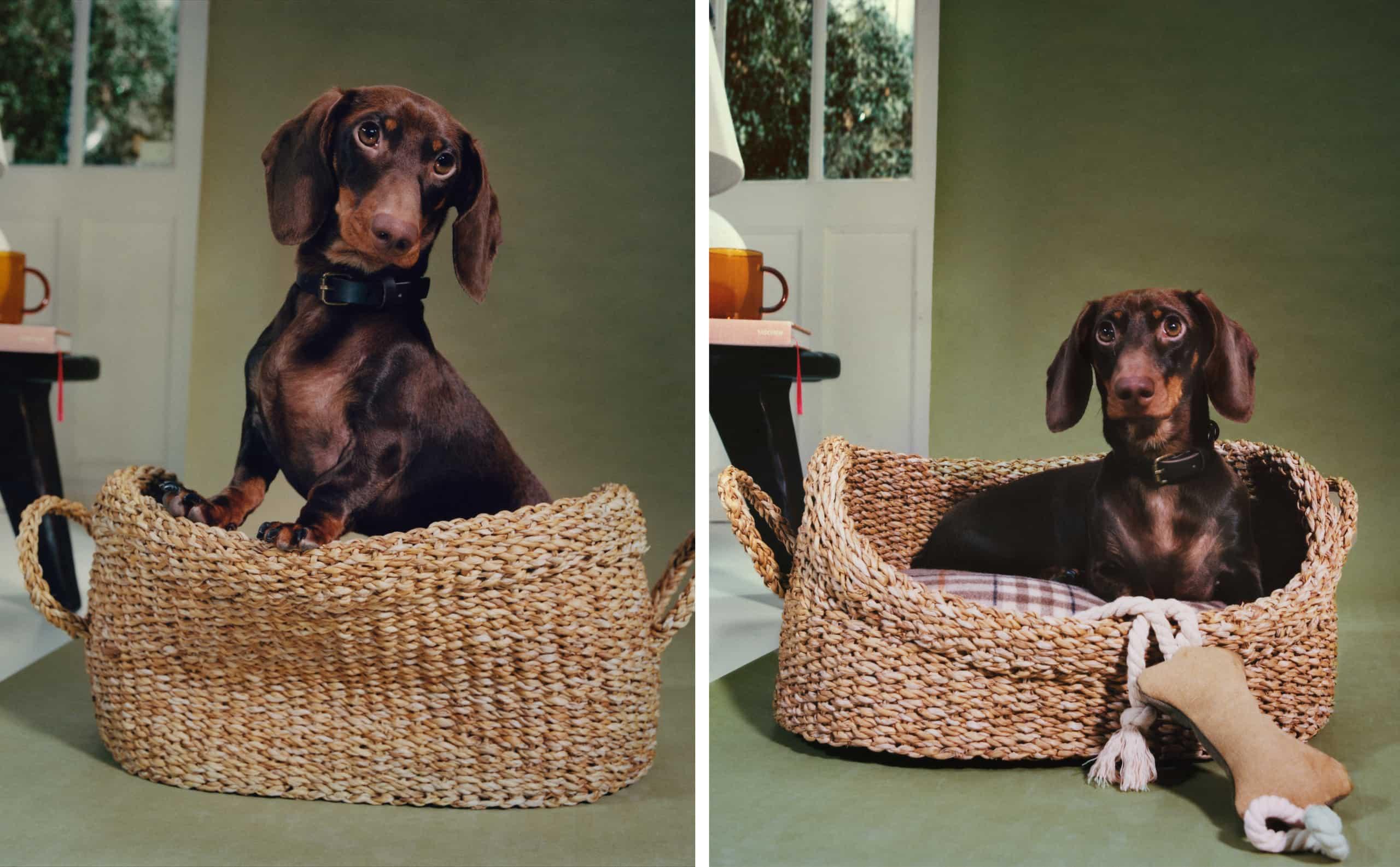Zara Home: Lanza su nueva colección para mascotas que querrás tener en tu casa