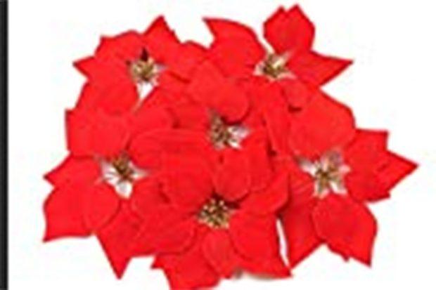 Flor de Pascua de Mercadona./Mercadona