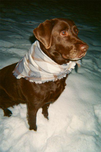 Manta para mascotas de cuados en tonos tierra./Zara