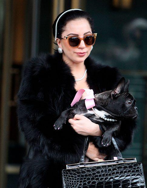 Así son los perros de Lady Gaga / Gtres