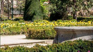 Chanel restaurará el Real Jardín Botánico de Madrid / @rjbotanico
