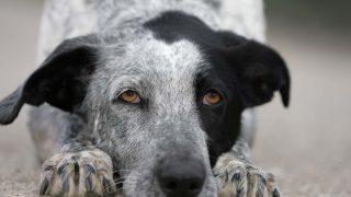 Custodia compartida mascotas/Gtres