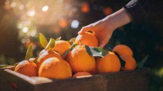 Descubre de qué modo podemos utilizar los ácidos frutales