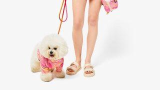 Best friend crew de Bershka te permite salir de casa con ropa a juego con tu mascota