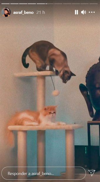 Así son los gatos de Asraf Beno e Isa Pantoja / Instagram